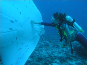 Diving with a Manta Ray, Seychelles